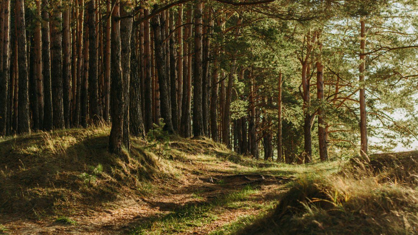 Foto van een mysterieuze omgeving in het bos op slowcialmedia waarbij je gefocust kunt werken