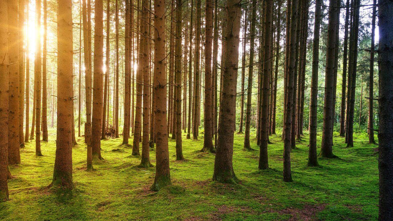 Foto van een rij bomen in een rustgevend donker bos dat met zonnestralen verlicht wordt op slowcialmedia waarbij je gefocust kunt werken