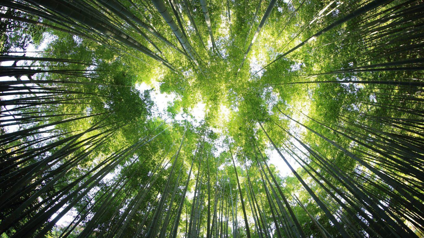 Foto van zachtgroene torenhoge bamboe takken op slowcialmedia waarbij je gefocust kunt werken