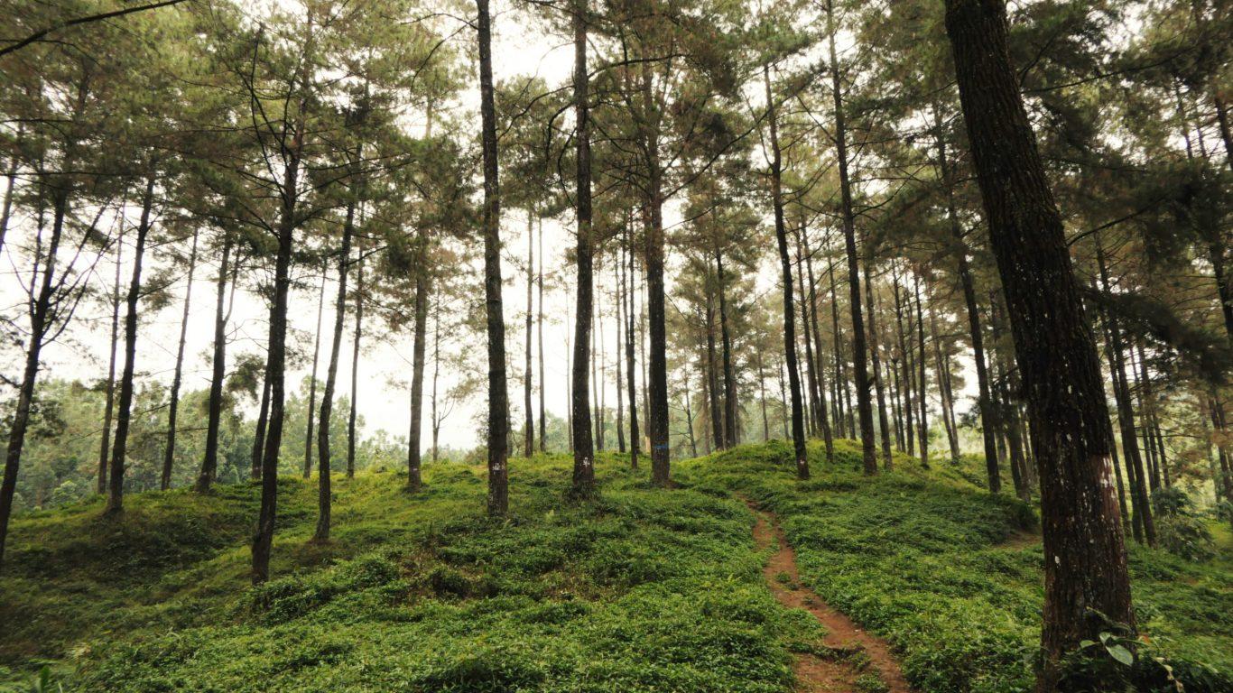 Foto van Indonesische bomen op slowcialmedia waarbij je gefocust kunt werken
