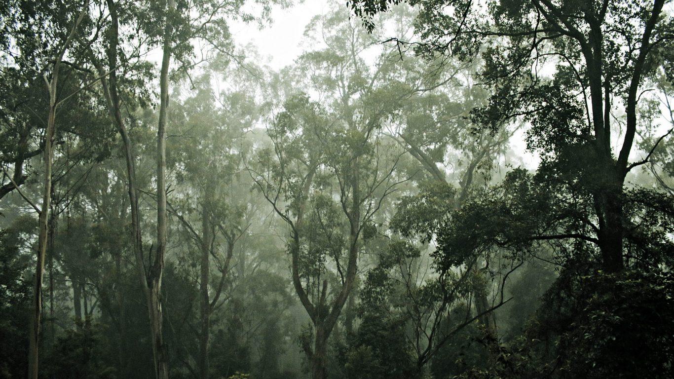 Foto van een mistig bos op slowcialmedia waarbij je gefocust kunt werken