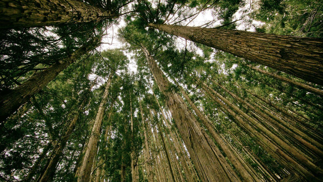 Foto van boomtoppen op slowcialmedia waarbij je gefocust kunt werken